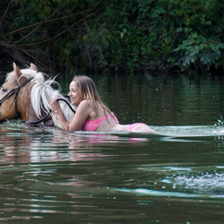 Zwemmen met paard verkleind