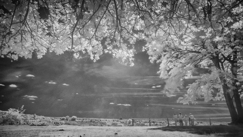 A sunny day - De wereld ziet er in infrarood altijd net even anders uit. Je weet dan ook nooit helemaal zeker met welke foto's je thuis gaat kome