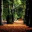 Kaapse bossen -8-