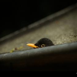 Head of a bird