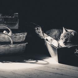 Kat in het bakkie