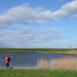 Hollands landschap