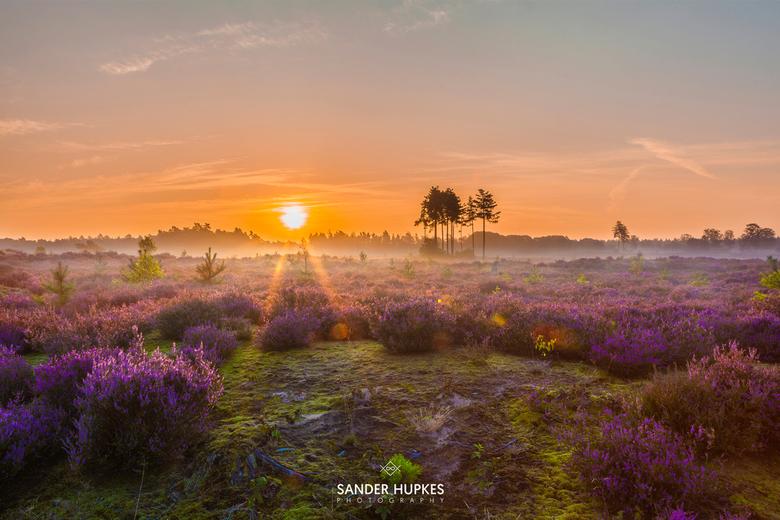 Sunrise above the purple heather -