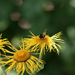 Bloempjes en bijtjes