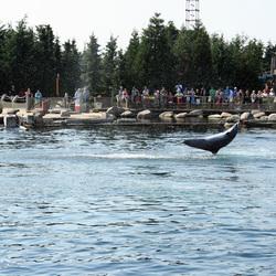 Knappe dolfijn