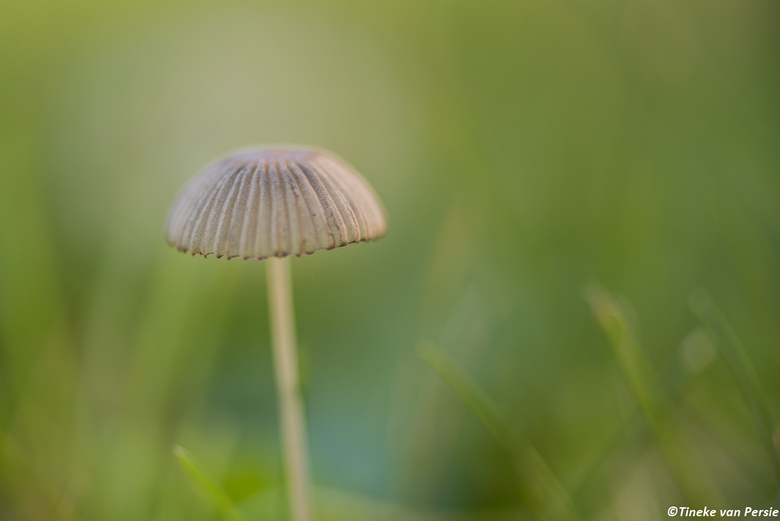 Shining in the green world