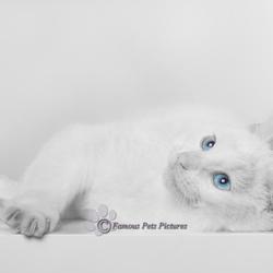 Bailey 'baby blue eyes'