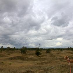 Kale Duinen nabij Appelscha