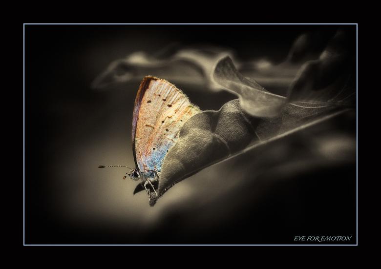 M'n eerste... - vlinder buiten! Genoeg in de vlindertuin geschoten, maar nu eindelijk ook een buiten! Ben er blij mee...