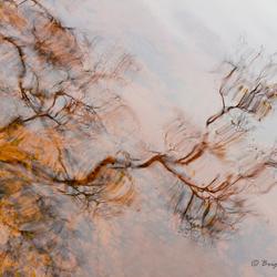 Natural Abstract