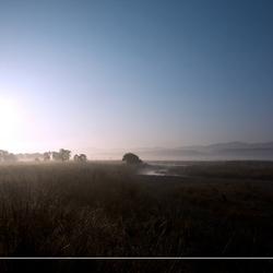 Mist in Corbett National Park