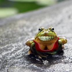 vrolijke kikker