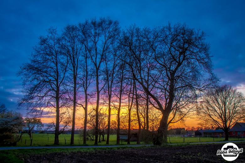 Trees in a row! - Was druk bezig in de tuin toen de lucht weer fantastisch mooi kleurde. Snel naar binnen gerend om de camera te pakken en deze foto t