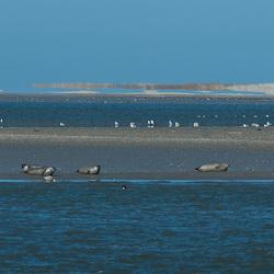zeehonden bij rottum