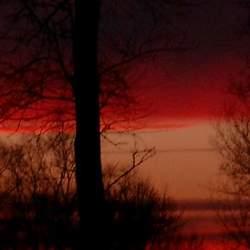 klievende bomen bij een uitzonderlijke zonsondergang