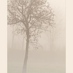 Boom in de mist...