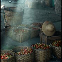 Birma Tomaten