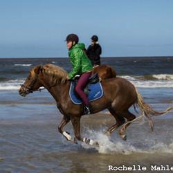 Paarden op het strand van Wijk aan Zee