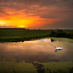 zonsondergang over zwanen