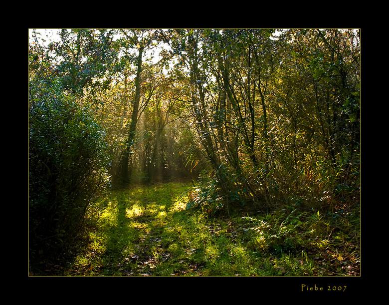 First light - Deze foto heb ik afgelopen zondagmorgen gemaakt in een natuurgebied nabij St Johannesga. Het licht kwam zo mooi door de takken naar binn