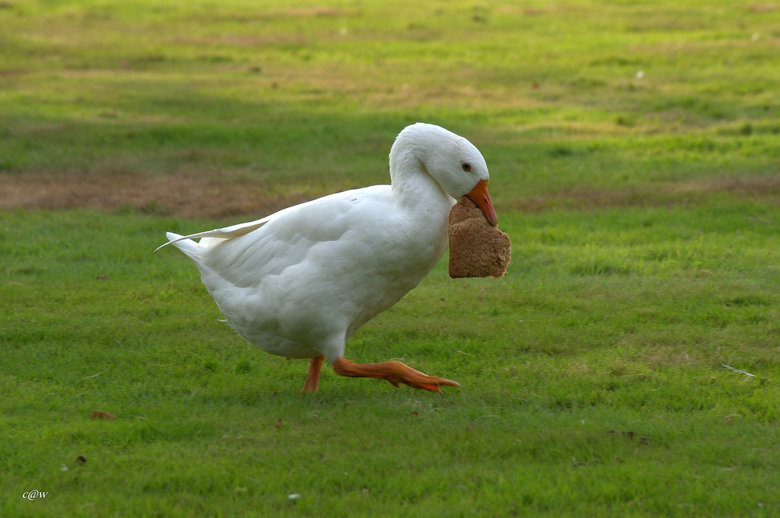 wegwezen met mijn brood - weg wezen met mijn brood, voordat een ander hem inpikt