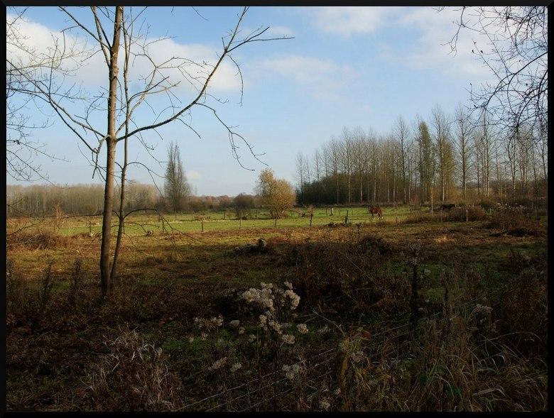 De Kevie (Belgie) - Foto van een paar weken geleden gemaakt in het natuurgebied de Kevie (Belgie)