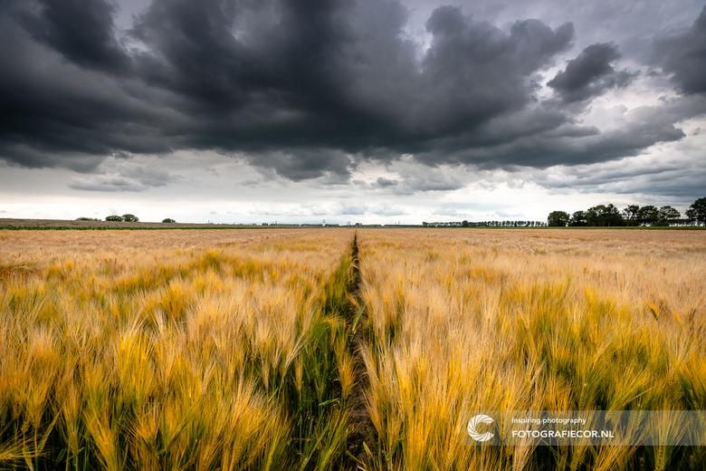 Toen er nog regen viel in Nederland - Je zou er bijna naar terug verlangen na die droogte van de laatste tijd.Toevallig gemaakt op de laatste regendag