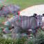 Greater Kudu Blijdorp Zoo 3D