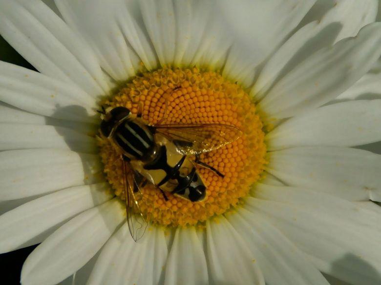 onbekend - Wie kan mij vertellen, hoe de naam is van deze insect.<br /> b.v.d.