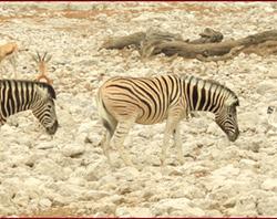 Namibie 30