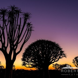 Sunrise quiver tree forest