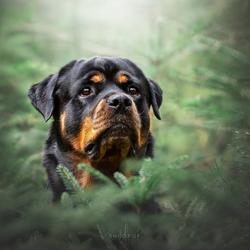 Willem in het bos