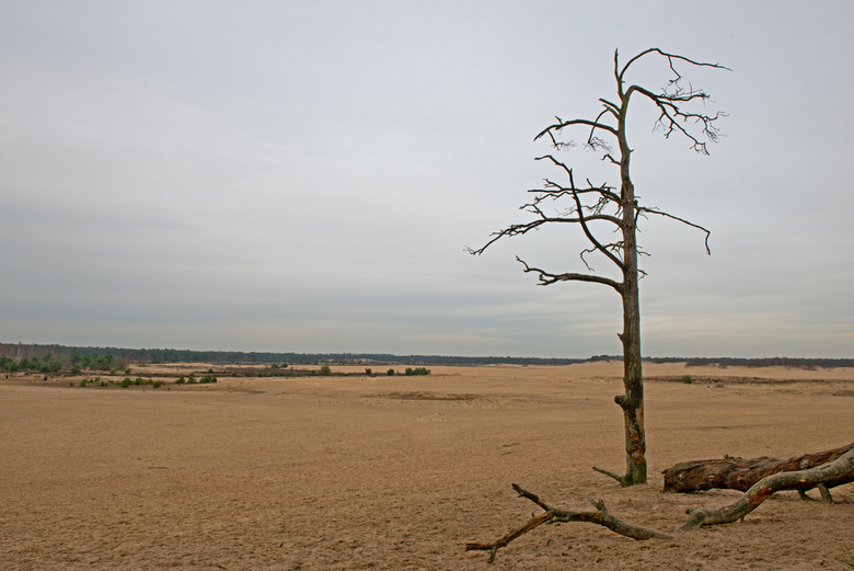 Alleen in de middag - Net aangekomen op de grote vlakte was er al een object om met die vlakte vast te leggen.<br /> Onderweg zag het er nog naar uit