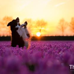 Fenna poseert bij de tulpen