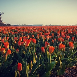 A bit of typical Dutch