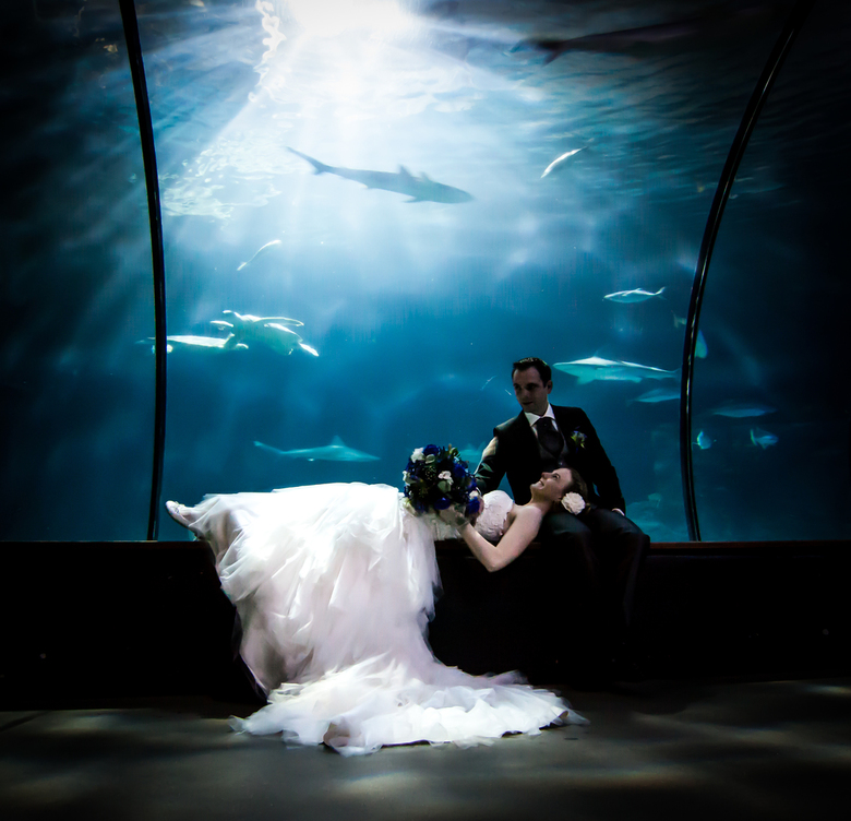 Trouwen in Blijdorp - Paar weken geleden deze mooie foto mogen maken van een bruiloft van oude vrienden van me. Blijdorp was de locatie, in eerste ins