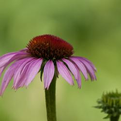 een bloemetje voor het weekend  ......