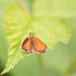 Little Orange beauty
