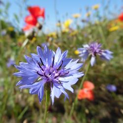 Wild bloemenveld