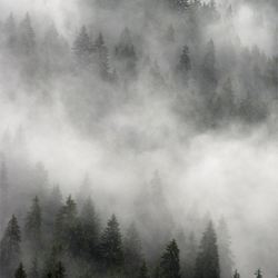 Misty Mountain