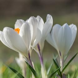 Eindelijk lente
