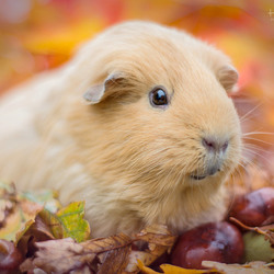 Love the fall....