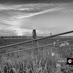 Sunset over the meadow bnw