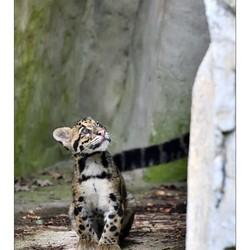 Newborn Predator