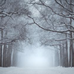 Winter Lane II