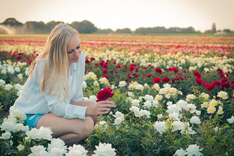 Nicole in rozenveld - Fotoshoot met Nicole in een rozenveld in het Limburgse Lottum.