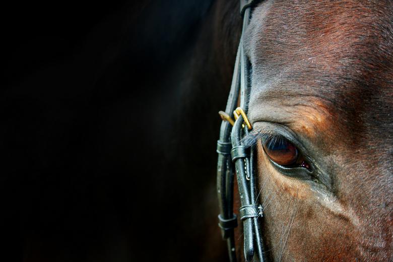 Black shot - na een lange tijd weer een vrije middag gehad te hebben heb ik vorige week genoten van het heerlijke weer en van mijn prachtige paard. na