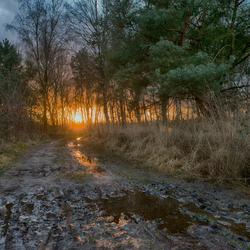 natte januari in het bos