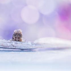 ice princess....