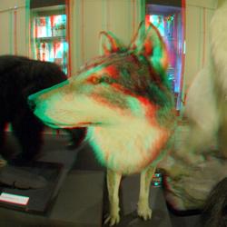 Wolf NHM Rotterdam 3D Fisheye